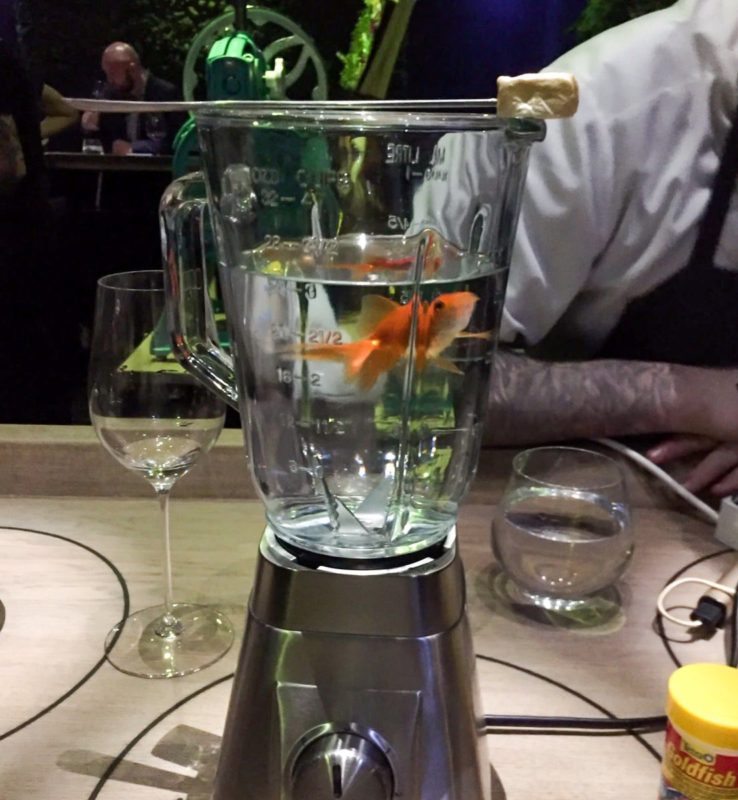 goldfish in a liquidiser